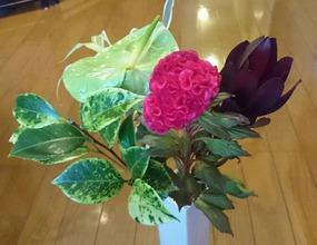 今週のお花と花言葉とお知らせ