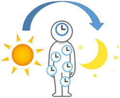 体内時計は日光が鍵
